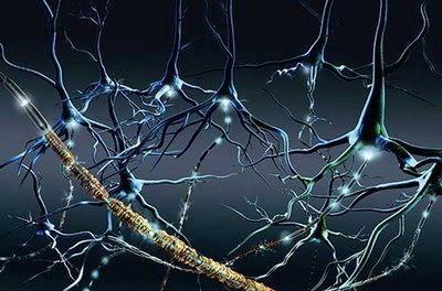 neurologia cerebro