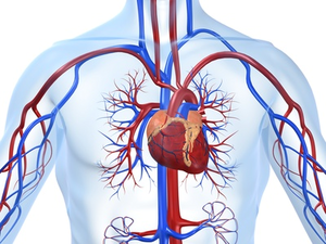 malformacion cardiaca, síndrome corazon mano tipo 3