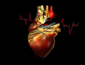 valvulas cardiacas