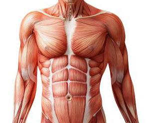 debilidad muscular