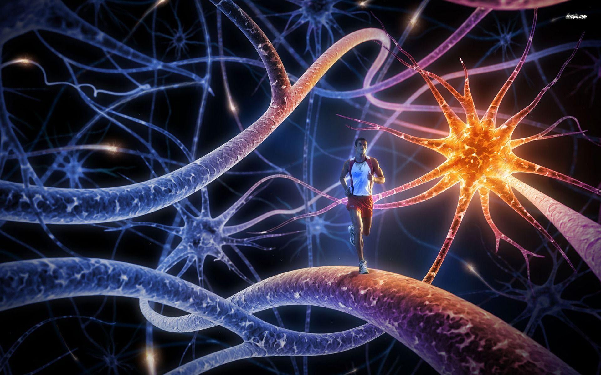 neurona,corredor, eerr, estudiante