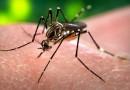 Dengue, América Latina