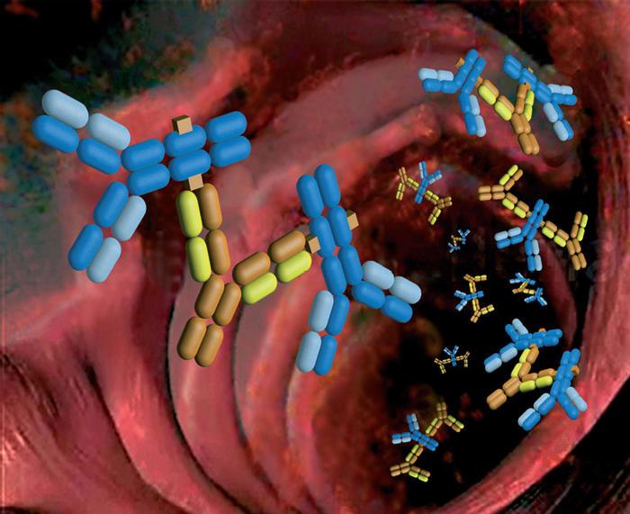 Vasculitis por inmunoglobulina A
