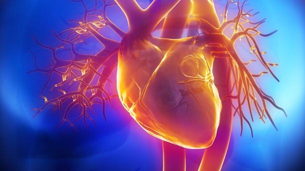 Persistencia del conducto arterioso ORPHA706