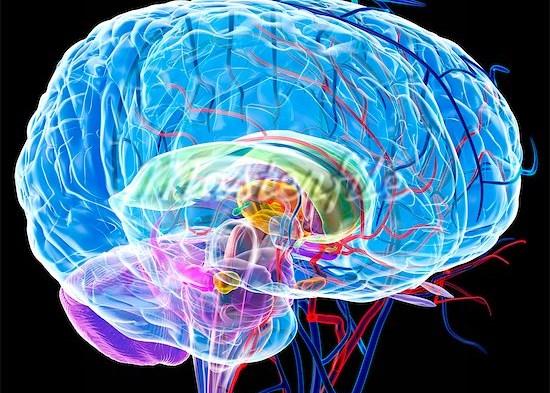 Liponeurocitoma cerebeloso