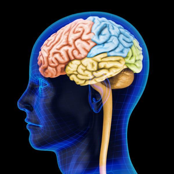 Narcolepsia tipo 1, neurofisiología