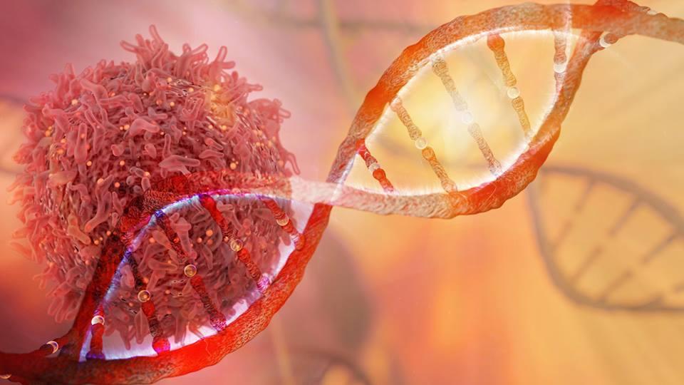 cáncer sangre, células madre