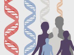 Un gran número de genes relacionados con las funciones inmunitarias y con enfermedades relacionadas con el sistema inmunitario han evolucionado junto a los humanos. Imagen: MedigenePress SL.