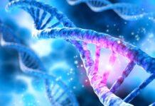 desorganización genoma, gen Notch