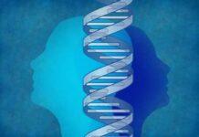 variación genética, sexo biológico