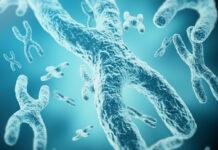 cilios primarios con el síndrome X frágil