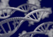 ensayo para terapia génica de fenilcetonuria