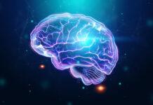 gen, síndrome de Rett, desarrollo neuronal masculino