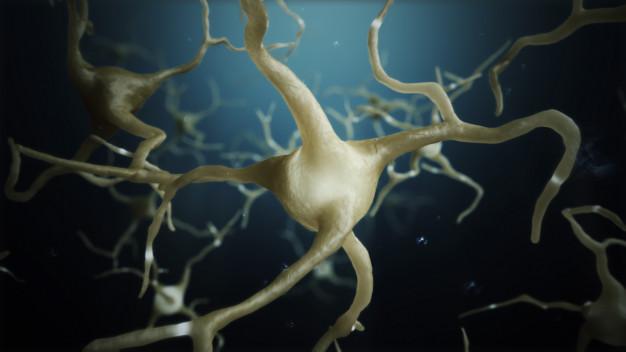 investigadores mecanismos enfermedades neurodegenerativas, comienzo vida