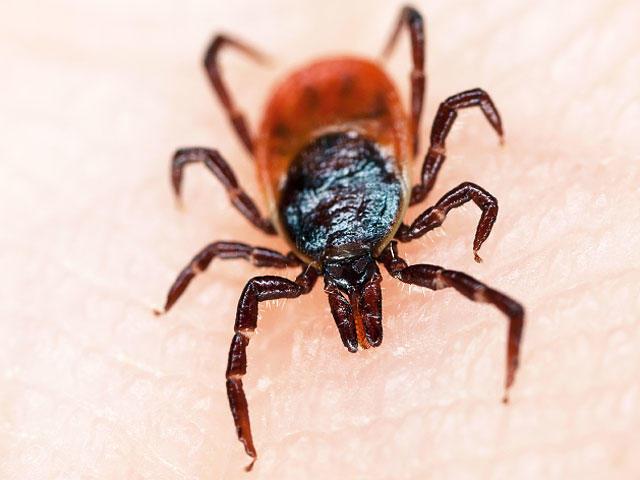enfermedad transmitida garrapatas no es enfermedad de Lyme