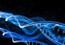 Gen SORD vinculado al nuevo subtipo de la enfermedad de Charcot-Marie-Tooth