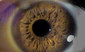 A los CiPC se les otorgó la designación de medicamento huérfano para retinosis pigmentaria