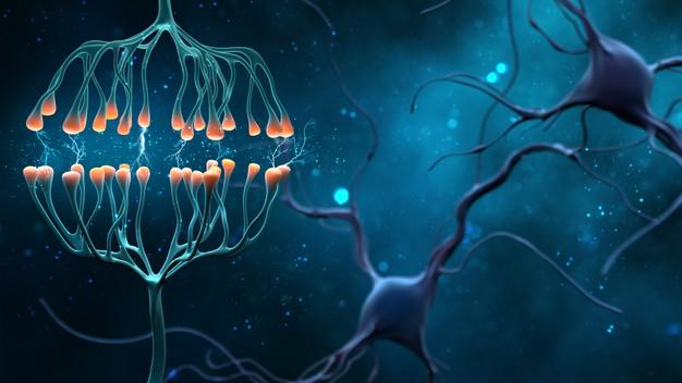 Descubierto un paso crucial en el desarrollo de enfermedades neurodegenerativas potencialmente mortales