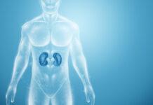 Estudio identifica nuevas mutaciones del síndrome de Alport