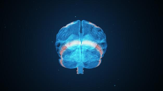 Investigan un nuevo mecanismo de neurotoxicidad mediado por ARN pequeños en la enfermedad de Huntington