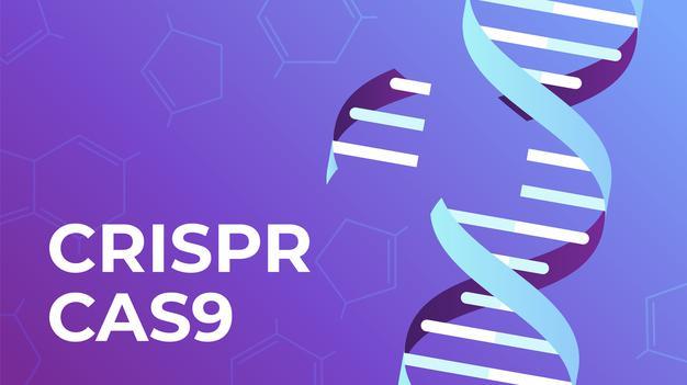 Mejoran la eficacia y precisión de la edición genómica para el tratamiento de la epidermolisis bullosa