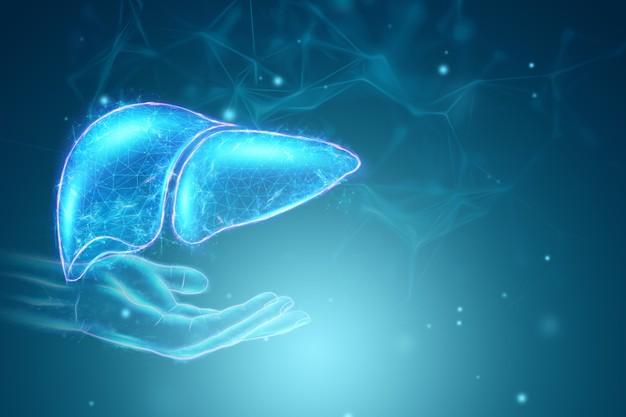 Proponen una nueva estrategia terapéutica para el tratamiento de la enfermedad hepática poliquística
