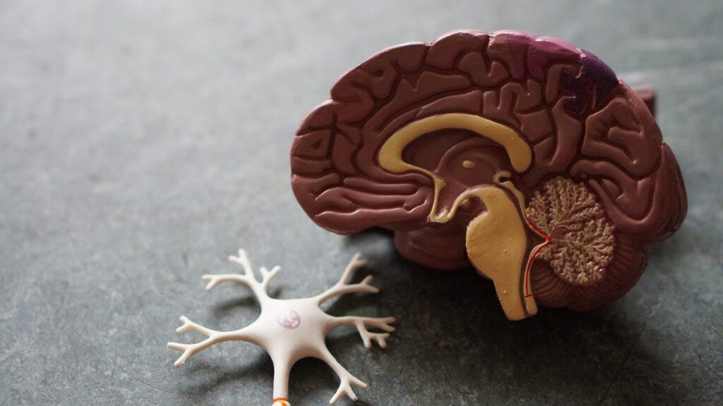 Asociación comienza ensayo clínico ION 363 para la esclerosis lateral amiotrófica por mutación de FUS