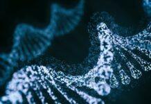 La nueva herramienta de edición de base CRISPR de Beam se enfoca en la mutación de células falciformes