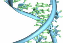 Enfermedad genética rara causada por mutaciones en la proteína que controla el metabolismo del ARN