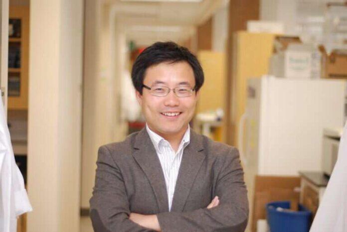 Los investigadores identifican un nuevo mecanismo mediante el cual las células madre trasplantadas tratan la enfermedad