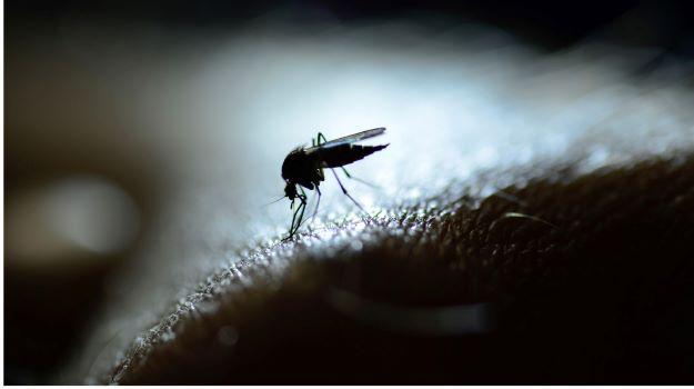 Los investigadores descubren un compuesto que puede impedir que el parásito de la malaria provoque enfermedades