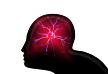 El modelo que utiliza señales cerebrales puede funcionar como un sistema de alerta temprana para las convulsiones