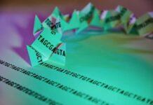 30 años investigando los trastornos genéticos causados por expansiones de repeticiones de ADN
