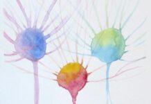 Identifican una forma de esclerosis lateral amiotrófica relacionada con la síntesis de esfingolípidos