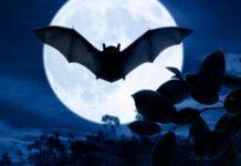 Los murciélagos, grandes aliados de la humanidad