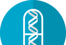 Nueva esperanza para pacientes con ELA y ataxia de Friedreich a través del transporte de vectores virales