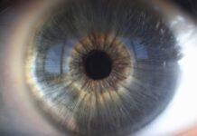 Un nuevo estudio ayuda a comprender las bases moleculares de las distrofias hereditarias de retina causadas por el gen 'CERKL'