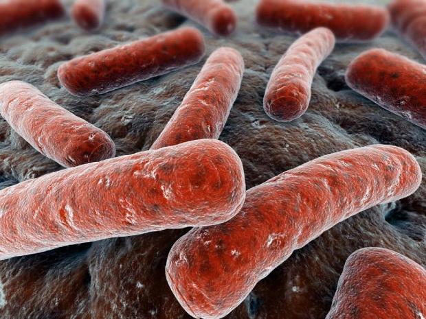 El Fondo GHIT anuncia una nueva inversión para identificar nuevos fármacos contra la tuberculosis
