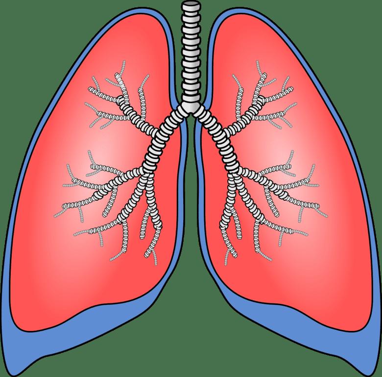 El estudio colaborativo proporciona una mayor comprensión de la fibrosis pulmonar idiopática