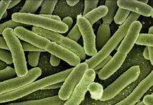 La melioidosis infecta a tres personas en los EE.UU.