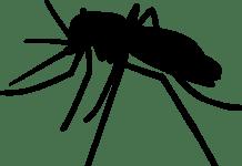 designación innovadora de la FDA para vacuna contra el virus Chikungunya