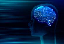 Descubierto el papel clave de las proteínas implicadas en la esclerosis lateral amiotrófica