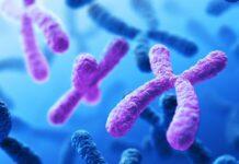 Dos estudios presentan al mapeo óptico genómico como herramienta de utilidad para la práctica clínica