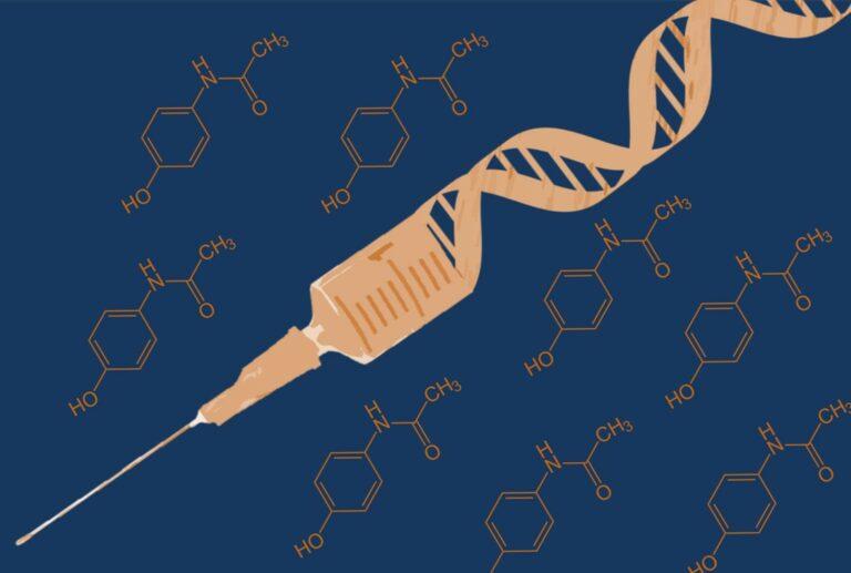 Toxicidad inducida al paracetamol para mejorar eficacia de terapias génicas dirigidas al hígado