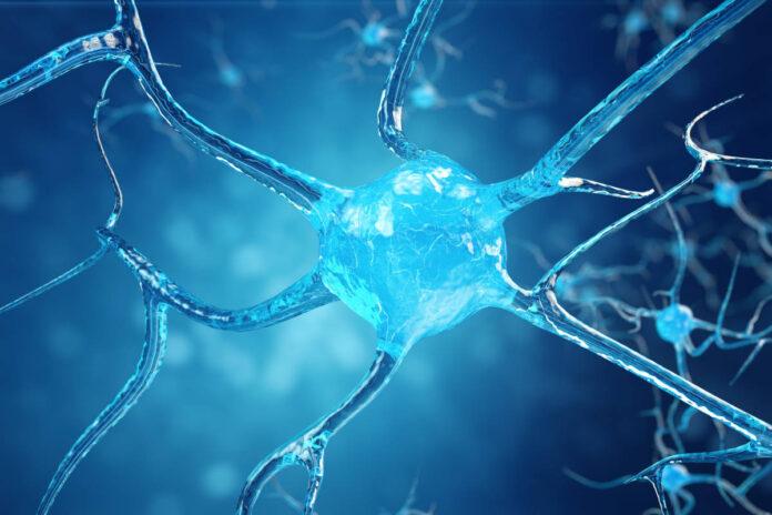 Cambios sutiles en un microARN pueden conducir a la aparición de esclerosis lateral amiotrófica