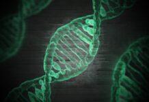 Las mutaciones de TP73 pueden aumentar el riesgo de esclerosis lateral amiotrófica